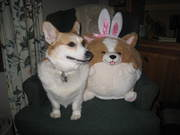 Easter Ears? no these are mine.....
