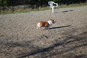 Running at the park
