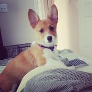 Lola!
