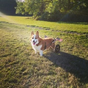 Wind in my ears and sunshine on my head!