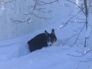 Teddy In Deep Snow