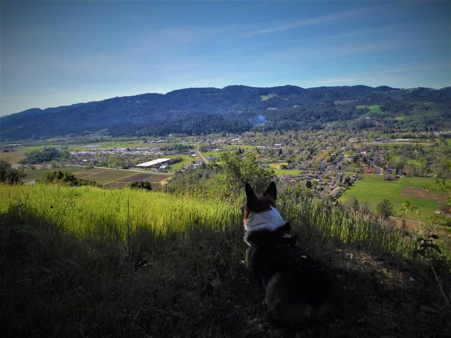 Napa valley CA
