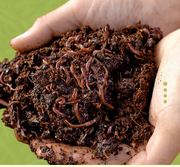 Gettin' Wriggly With It: Build A Worm Composting Bin