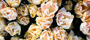 Flower Arranging with CHICORY Floral