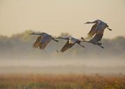 Mythic Adventure:  Cosumnes River Preserve & Birds in  Mythology