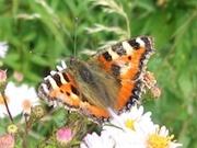 Biodiversity Day 2012