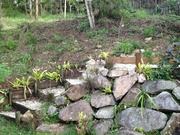 Terracing my backyard