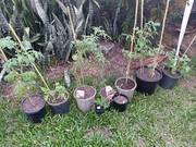 My 10 Tomatoes