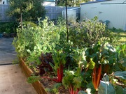 Winter crops from our old place