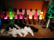 My Cat And Lamps!