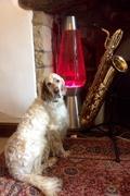 The Big Guns: Big Dog - Big Lava Lamp - Big Saxophone