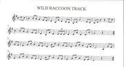 Wild Raccoon Track