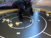 Sasha: No.1 Feline Crokinole player in the world