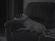 My Dog, Rambo