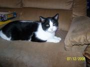 my cat bobo