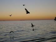 Twilight birds