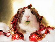 christmas_animals_640_05