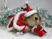Cute-Christmas-Animal-Bunny-Santa-Hat-Suit