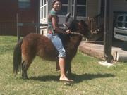 Our next calf horse!!