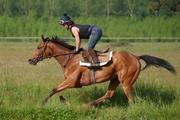 entrainement cheval