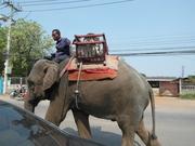 Un éléphant en ville...!