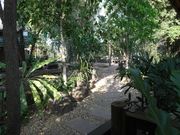 La végétation thaïlandaise...