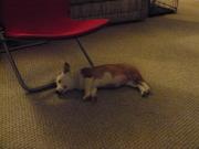 Snoozin' puppy