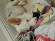 Silas as a pup