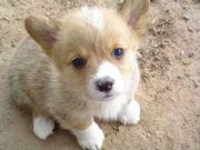 Leo my spoiled puppy!