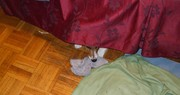 eating a sock 1 : concealment