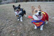 Halloween Dog Park 3