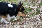 Maybe a trackin dog