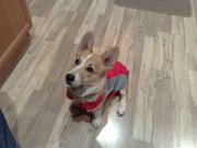 His new vest