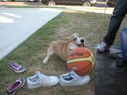 Newton playing basketball