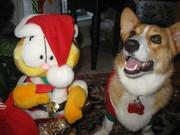 Wally & Garfield