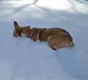 Tootsie stuck in snow