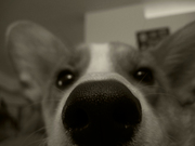 Pixel nose!