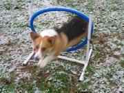 Wally Feb 2010 snow 007