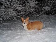 Missy snow
