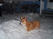 Missy snow again