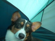 Puppies' First Camping Trip