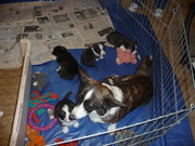 The puppies at 5 wks!