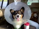"""The Cone of Shame"""