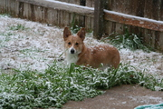 Beni's first snow