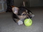 Got my ball