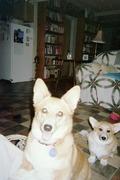 Callie & Cooper