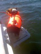 Sam and Pip go boating