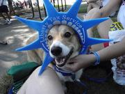 Peachtree road race dog