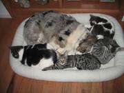Teri and her kitties