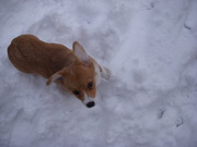 Frida in the snow!